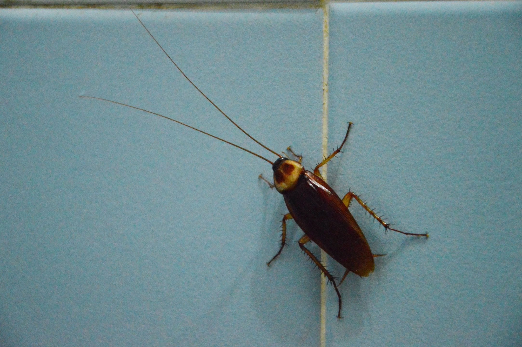 Blog - Page 8 of 22 - Bug Guardian Pest Prevention