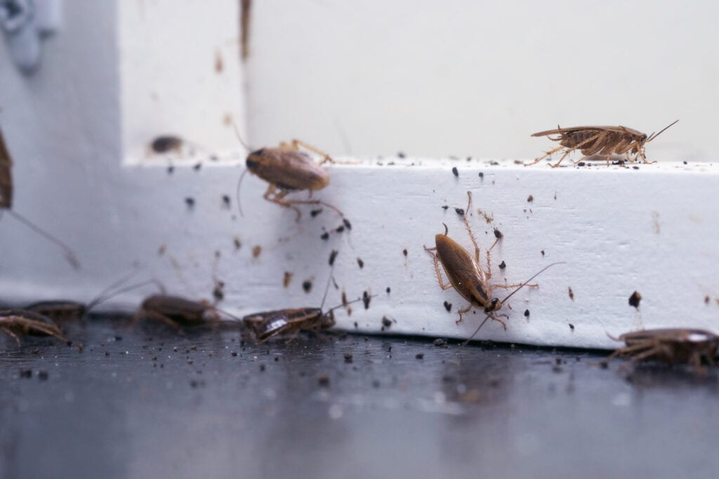 Bug Bombs Don't Work on Cockroaches